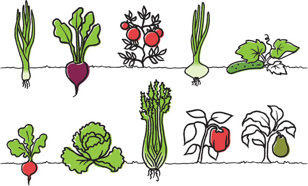 produce-salads