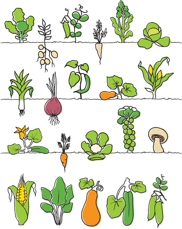 produce-veg